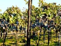 Víno z Burgenlandu patří k těm nejlepším na světě.