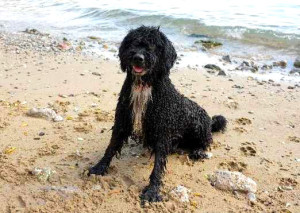 Pes na pláži, Malý dobrodruh