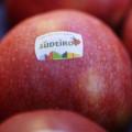 Jablka, Malý dobrodruh