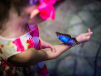 Tropickou zahrada Papilonia ukrývá stovky živých motýlů. Foto: Papilonia.cz