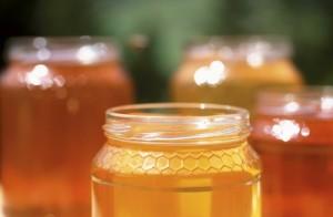 Med, Malý dobrodruh
