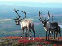 Na dovolenou mezi Laponci určitě nezapomenete. Foto: www.periscope.cz