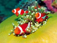 Rudé moře přímo vybízí k potápění a objevování obyvatel mořských hlubin.