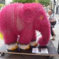 Výstava slonů, Malý dobrodruh