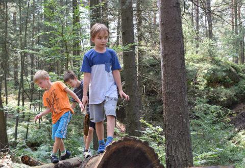 Les je významný pro lidské zdraví a dá se také využít jako skvělá herna a tělocvična. Foto: www.juklik.cz