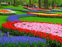 Keukenhof 2015: Květinová dovolená v Holandsku