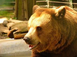 Medvědi z Večerníčka, Beroun, Malý dobrodruh