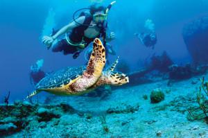 potápění Britské Panenské ostrovy