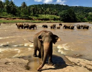 Safari na Srí Lance