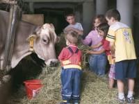 Během dovolené na statcích společnosti Roter Hahn si děti užijí domácí zvířata. Foto: www.suedtirol.info