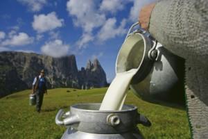 Festival mléka, Malý dobrodruh