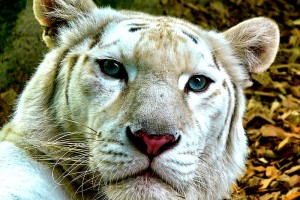 Známe 10 nejlepších zoologických zahrad v ČR