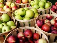 S jablky lze připravit spoustu výborných receptů. Foto: www.nebespan.cz