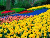 Největší květinový park světa Keukenhof otevírá už 24. března!